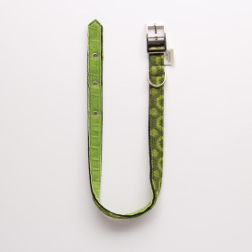 Halo Dog collar - small to extra large Apple